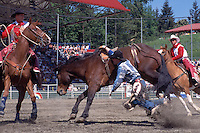 Cowboy with Hand caught in Rope after falling off Horse in Bareback Riding Event, at the Cloverdale Rodeo, British Columbia, Surrey, Canada