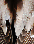 Close-up of a ducks feathers.