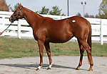 Hip 279 Pure Clan, consigned by Hill n'Dale..November 04, 2012.