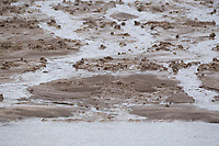 20-1-2021 Farmland flooded in Lincolnshire <br /> ©Tim Scrivener Photographer 07850 303986<br />      ....Covering Agriculture In The UK....