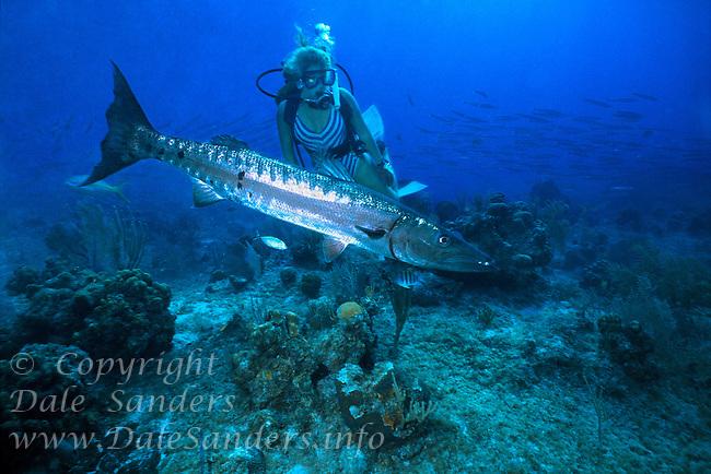Female Scuba Diver and a Great Barracuda ( Sphyraena barracuda ), Grand Cayman Island, BWI.