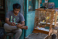 Yogyakarta, Java, Indonesia.  Young Man with Birds for Sale Using his Cell Phone while Waiting for a Customer, Bird Market.