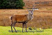 Tom Mackie, ANIMALS, REALISTISCHE TIERE, ANIMALES REALISTICOS, wildlife, photos+++++,GBTM100507-1,#a#, EVERYDAY