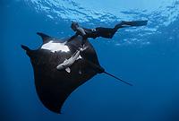 giant oceanic manta ray, Mobula birostris, formerly Manta birostris, and free diver. Soccoro Island, Mexico, Pacific Ocean