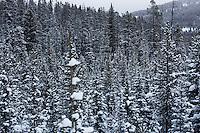 Trees at Showdown Ski Area on King's Hill in the Little Belt Mountains near Neihart, Montana, USA.