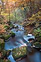 Beech woodland surrounding Burbage Brook. Padley Gorge, Peak District National Park, UK. Autumn, November.