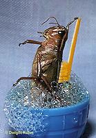 GF10-001h  Funny Grasshopper - taking a bath