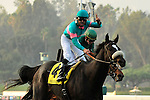 7 November 2009:  Zenyatta with Mike Smith up (#4) wins the G1 $5 Million Breeder's Cup Classic in Arcadia, California.