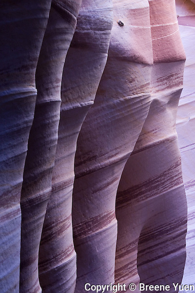 Narrow striated sandstone canyon walls in Zebra Slot Canyon, near Escalante, Utah, October 2007
