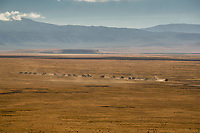 Tanzania. Ngorongoro Crater, Vehicles Searching for Game on Crater Floor.