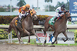 Hallandale Beach, FL- February 06: #5 Kelly Tough with jockey Paco Lopez up win a Maiden Allowance race at Gulfstream Park . (Photo by Arron Haggart)