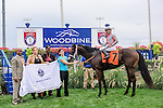Conquest Daddyo(7) with Jockey Patrick Husbands aboard in the winners circle after running to victory at the Summer Stakes at Woodbine Race Course in Toronto, Canada on September 12, 2015.