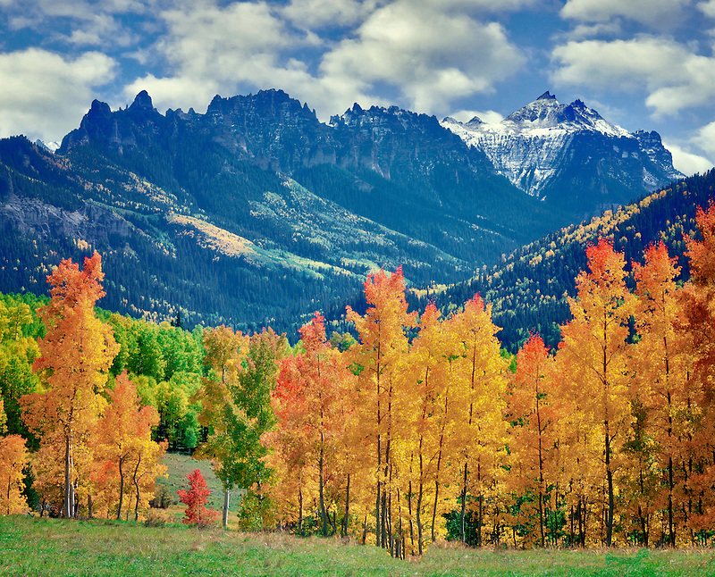 Fall colored aspens with storm clouds. Uncompahgre National Forest