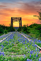 Bluebonnet at Railroad Tracks Sunrise 2  - We have come to this old abandoned rail road track in the past years for some texas bluebonnets, but this year instead of catching a sunset we decided to try for a sunrise and we got lucky.  Today we had a great predawn sunrise over this railroad track and tressel right before the sunrise pop over the horizon with some fantastic colors in a vertical format.  I managed to get a few shot before some heavyier clouds moved in at predawn, but cleared  a bit for a sunrise shot later on also.  What I loved was the beautiful colorful orange sky behind the tressel. Any case the pre dawn sunrise over these bluebonnets were a great catch in the Texas hill country this year.