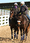 Rushing Fall, trained by trainer Chad C. Brown, exercises in preparation for the Breeders' Cup Filly & Mare Turf at Keeneland Racetrack in Lexington, Kentucky on November 3, 2020.