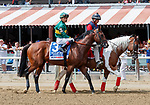 Engage in the post parade as Promises Fulfilled (no. 1) wins the Allen Jerkens  Stakes (Grade 1), Aug. 25, 2018 at the Saratoga Race Course, Saratoga Springs, NY.  Ridden by  Luis Saez, and trained by Dale Romans, Promises Fulfilled finished 1 1/4 lengths in front of Seven Trumpets (No. 5).  (Bruce Dudek/Eclipse Sportswire)