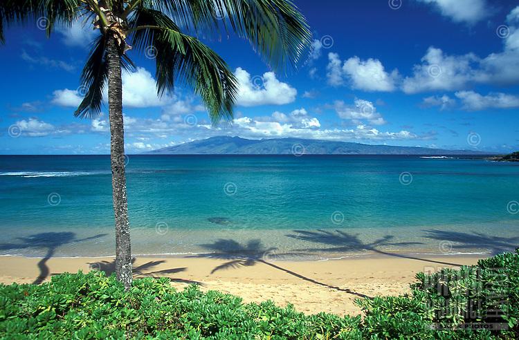 Palm tree and palm shadows at Napili Bay, Maui.