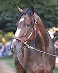 Horse of the Year Rachel Alexandra.