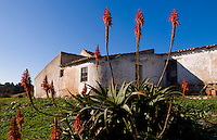 Local house with red flowers outside of Vila de Bispo in the Southern Algarve in Portugal