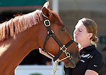 September 08, 2014:Hip #598 Sea the Stars - Dress Uniform filly at the Keeneland September Yearling Sale.   Candice Chavez/ESW/CSM