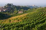 Italien, Piemont, Langhe: Weinberge und Haselnussbaeume, im Hintergrund Castiglione Falletto | Italy, Piedmont, Langhe: vineyards and hazelnut trees near Castiglione Falletto (background)