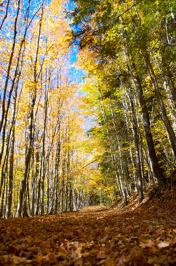A hiking trail leading through an autumn colored forest. Chatham, MI