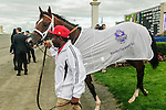 Conquest Typhoon leaves the winners circle after winning  the Summer Stakes at Woodbine Race Course in Toronto, Canada on September 13, 2014 with Jockey Patrick Husbands aboard.