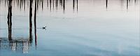 Early Swim, Branford River