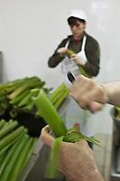 Europe/France/Poitou-Charentes/79/Deux-Sèvres/Env de Niort/Aiffres:  Transformation de l'angélique du Marais Poitevin à la Maison Huvelin  - Autorisation : 2010-107<br /> Préparation de l' Angélique confite, la confiserie de l'angélique est une spécialité de la ville de Niort