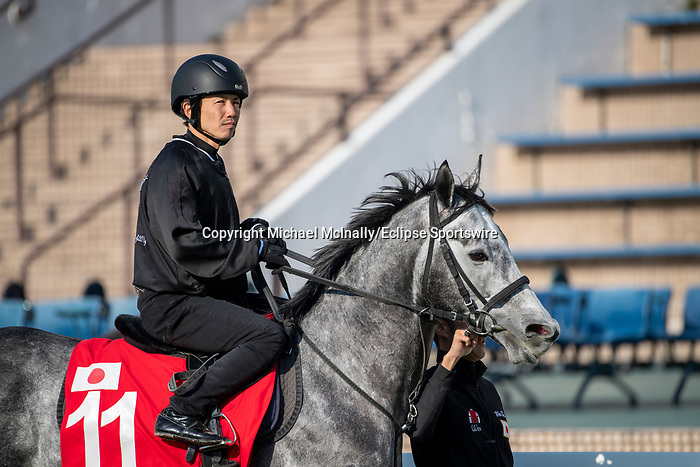 SHA TIN, HONG KONG – December 4: Win Bright at trackwork on December 4 at Sha Tin Race Course in Hong Kong before starting in the Longines Hong Kong Cup. Michael McInally/Eclipse Sportswire/CSM