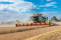Combining wheat - Lincolnshire, August