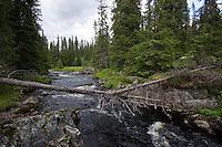 Naturnaher Bach, Norwegen, Skandinavien