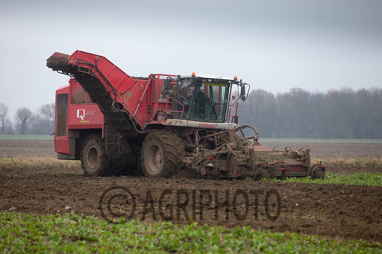 8/1/2021 Contractors lifting sugar beet in Lincolnshire <br /> ©Tim Scrivener Photographer 07850 303986<br />      ....Covering Agriculture In The UK....