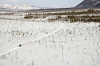 Dr. Jim Lanier mushes his dogs through the scrub spruce trees on the trail between Ophir and Cripple on Thursday during the 2008 Iditarod