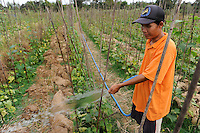 Laos, farmer irrigate cucumber plants, which he is planting after paddy harvest on the field, irrigation / LAOS, Dist. Vientiane , Dorf Ban Nasala, Reisfarmer Phao Mamugda baut nach Reisernte Gurken als Zwischenfrucht an, Bewaesserung