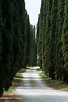 Italy, Veneto, Lake Garda, Malcesine: cypress alley at lakeside promenade Via Lungolago towards district Val di Sogno | Italien, Venetien, Gardasee, Malcesine: Zypressenalle an der Via Lungolago (Fussweg am See entlang) zum Ortsteil Val di Sogno