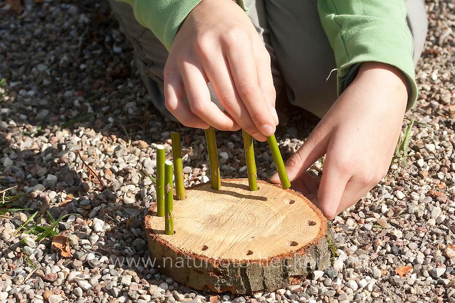 Mädchen, Kind baut ein Osternest aus Baumscheibe, Weidenästchen, Moos, Gänseblümchen und bunten Ostereiern; 2. Schritt: In die Löcher am Rand einer Baumscheibe werden Weidenästchen gesteckt