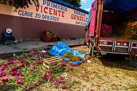 A Mexican flower market vendor sell piles of marigold flowers (Flor de muertos) for Day of the Dead celebrations in Oaxaca, Mexico, 30 October 2019. Day of the Dead (Día de Muertos), a religious holiday combining the death veneration rituals of Pre-Hispanic cultures with the Catholic practice, is widely celebrated throughout all of Mexico. Based on the belief that the souls of the departed may come back to this world on that day, people gather together while either praying or joyfully eating, drinking, and playing music, to remember friends or family members who have died and to support their souls on the spiritual journey.