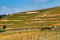 A view over the Crozes-Hermitage vineyards in the part of the appellation closes to Hermitage. On slopes with stone terraces. Roadsign with speed limit 50.  Crozes Hermitage, Drome, Drôme, France, Europe