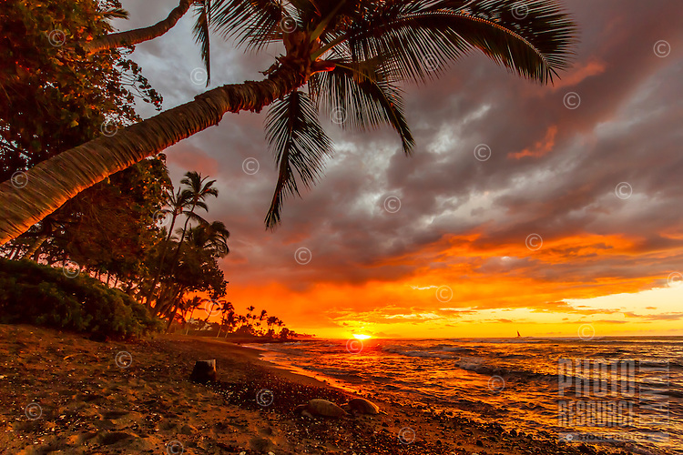 Two turtles rest on a black sand beach lit by a vibrant sunset on Christmas day, Big Island.