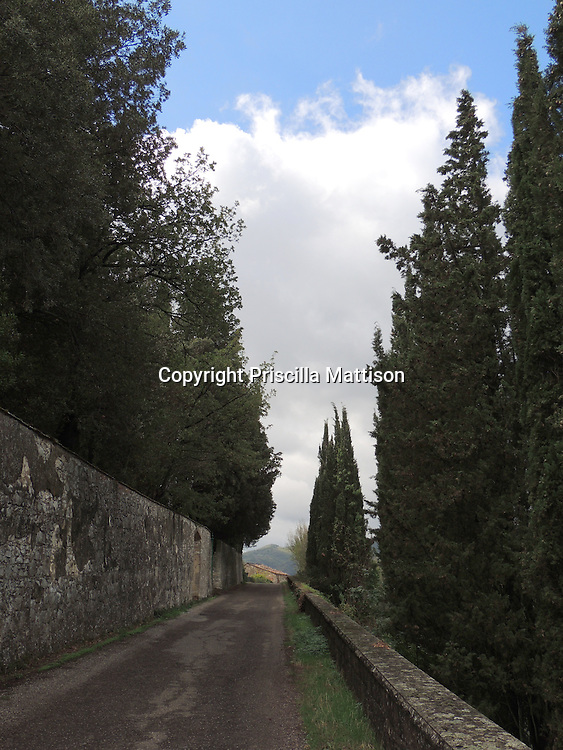 Val d'Arno, Italy - October 2, 2012:  Cypress trees line one side of a Tuscan road.