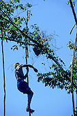 Bacaja village, Amazon, Brazil. Young man hitting the hornets' nest in an initiation ceremony; Xicrin tribe.