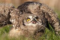 Barn Owl Centre Feb12