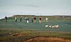 June 6, 2012; Team members take a sunset walk on Inishark Island, Ireland...Photo by Matt Cashore/University of Notre Dame