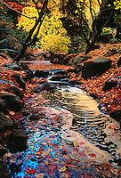 700-20527.© Dale Sanders.Beacon Hill Park.Victoria, British Columbia.Canada