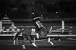 October 26, 2014: Thank You Marylou exercises in preparation for the Breeders' Cup Filly and Mare Spring at Santa Anita Park in Arcadia, California on October 26, 2014. Zoe Metz/ESW/CSM