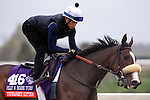 October 28, 2015:  Stephanie's Kitten, trained by Chad C. Brown and owned by Kenneth L. and Sarah K. Ramsey, exercises in preparation for the Breeders' Cup Filly & Mare Turf at Keeneland Race Track in Lexington, Kentucky on October 28, 2015. Jon Durr/ESW/CSM