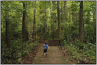 A boy races ahead on a wooden bridge and dirt path at the Carolina Raptor Center in Huntersville, NC. Model released.