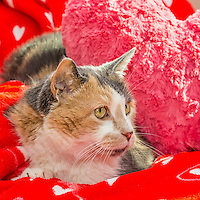 2015-01-30_CATS_PHS_8 cats