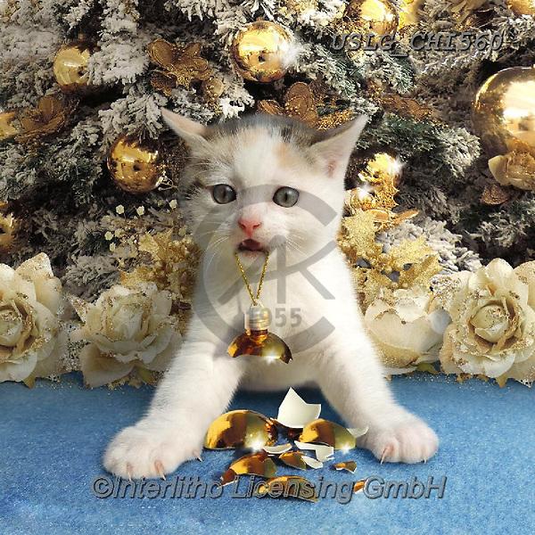 CHIARA,CHRISTMAS ANIMALS, WEIHNACHTEN TIERE, NAVIDAD ANIMALES, paintings+++++,USLGCHI560,#XA# ,funny ,funny